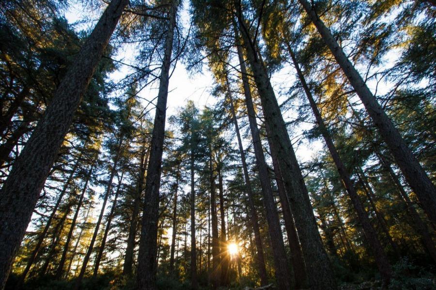forêt des cendres